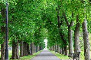 Yantacaw Park Nutley